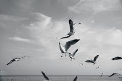Pájaros que arrebatan la comida en cielo Fotografía de archivo libre de regalías
