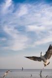 Pájaros que arrebatan la comida en cielo Imagenes de archivo