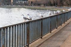 Pájaros que asientan en una cerca por el río Imágenes de archivo libres de regalías