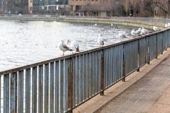 Pájaros que asientan en una cerca por el río Fotos de archivo