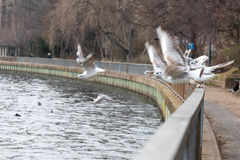 Pájaros que asientan en una cerca por el río Imagen de archivo
