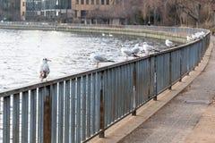 Pájaros que asientan en una cerca por el río Foto de archivo libre de regalías