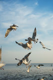 Pájaros que compiten con para coger la comida Fotografía de archivo