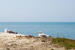 Pájaros que descansan sobre un borde del acantilado Fotografía de archivo