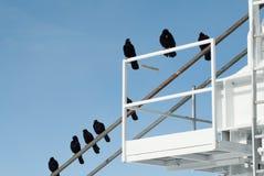 Pájaros que disfrutan de la visión en Chamonix Fotos de archivo