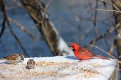 Pájaros que disfrutan de una invitación Fotografía de archivo