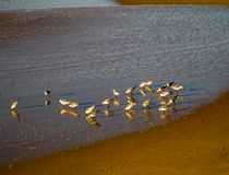 Pájaros que forrajean en la luz del sol de la mañana, RJ el Brasil fotos de archivo