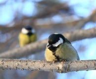 Pájaros que hablan Imagen de archivo