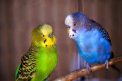Pájaros que hablan Imágenes de archivo libres de regalías