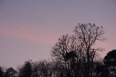 Pájaros que miran la puesta del sol Imagen de archivo libre de regalías