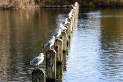 Pájaros que ocupan una fila de polos en un lago situado en el parque de la ciudad Imagenes de archivo
