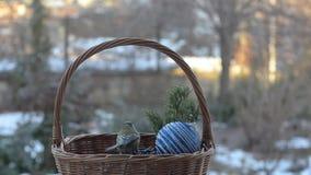 Pájaros que picotean las semillas fuera de una cesta de mimbre con las decoraciones de la Navidad almacen de metraje de vídeo