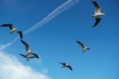 Pájaros que se deslizan en la nube y el cielo Fotografía de archivo