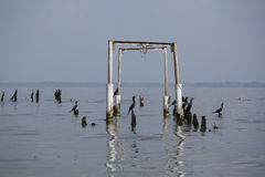 Pájaros que se encaraman en los pilares concretos, el lago de Maracaibo, Venezuela Imágenes de archivo libres de regalías