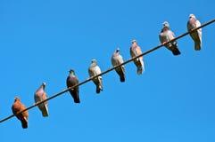 Pájaros que se sientan en el alambre. Fotografía de archivo libre de regalías