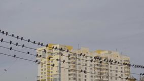Pájaros que se sientan en líneas eléctricas en la ciudad en el d3ia almacen de video