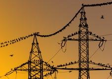 Pájaros que se sientan en líneas eléctricas por la mañana Foto de archivo libre de regalías