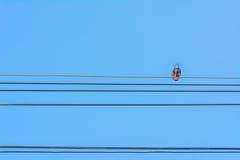 pájaros que se sientan en líneas eléctricas sobre el cielo claro Fotos de archivo libres de regalías