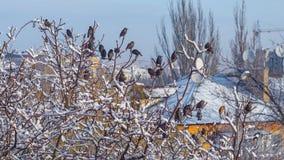 Pájaros que se sientan en la rama de árbol cubierta por la nieve Imagen de archivo