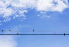 Pájaros que se sientan en un alambre Foto de archivo