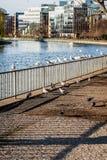 Pájaros que se sientan en una cerca y que vuelan por el río Imágenes de archivo libres de regalías