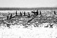 Pájaros que se sientan en una rama Foto de archivo libre de regalías