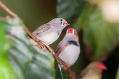 Pájaros que se sientan en una rama Imagen de archivo