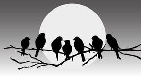 Pájaros que se sientan en una ramificación stock de ilustración