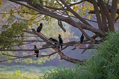 Pájaros que tienen una charla pacífica en el lago Karanji en Mysore, la India foto de archivo libre de regalías