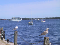 Pájaros que tienen una rotura en el embarcadero en el lago Ontario Toronto Canadá Imagen de archivo libre de regalías