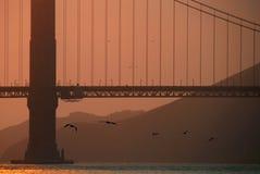 Pájaros que vuelan bajo el puente de puerta de oro Imagenes de archivo