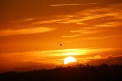 Pájaros que vuelan con una puesta del sol Imagenes de archivo
