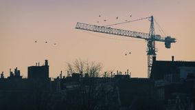 Pájaros que vuelan, Crane Behind Houses del horizonte de la mañana metrajes