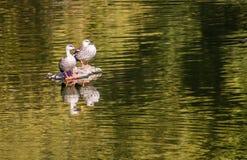 Pájaros que vuelan d3ia Imagen de archivo