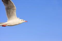 Pájaros que vuelan en cielo azul Imagen de archivo libre de regalías