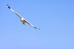 Pájaros que vuelan en cielo azul Foto de archivo