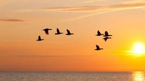 Pájaros que vuelan en el cielo en la puesta del sol Imagen de archivo
