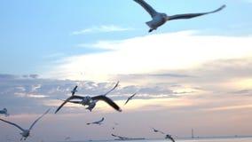 Pájaros que vuelan en el mar en la cámara lenta de la puesta del sol almacen de video