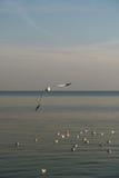 Pájaros que vuelan por la tarde Fotos de archivo libres de regalías