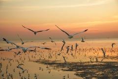 Pájaros que vuelan por la tarde Fotos de archivo