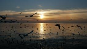 Pájaros que vuelan por mañana almacen de video
