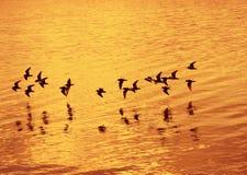 Pájaros que vuelan sobre el mar Imagenes de archivo