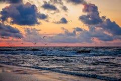 Pájaros que vuelan sobre el mar en la puesta del sol Fotografía de archivo