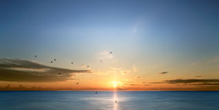 Pájaros que vuelan sobre el mar en la salida del sol Imagenes de archivo