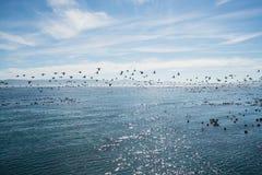 Pájaros que vuelan sobre el océano Imagen de archivo libre de regalías