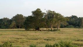 Pájaros que vuelan sobre un campo verde metrajes