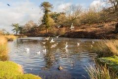 Pájaros que vuelan sobre un lago foto de archivo