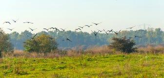 Pájaros que vuelan sobre un paisaje rural Fotos de archivo libres de regalías
