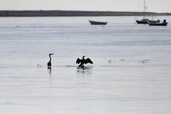 Pájaros retroiluminados del río imagen de archivo
