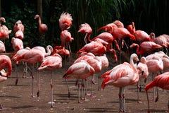 Pájaros rosados imagenes de archivo